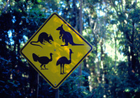 Australiapicture0012a500_2