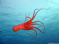 Underwater51600x1200